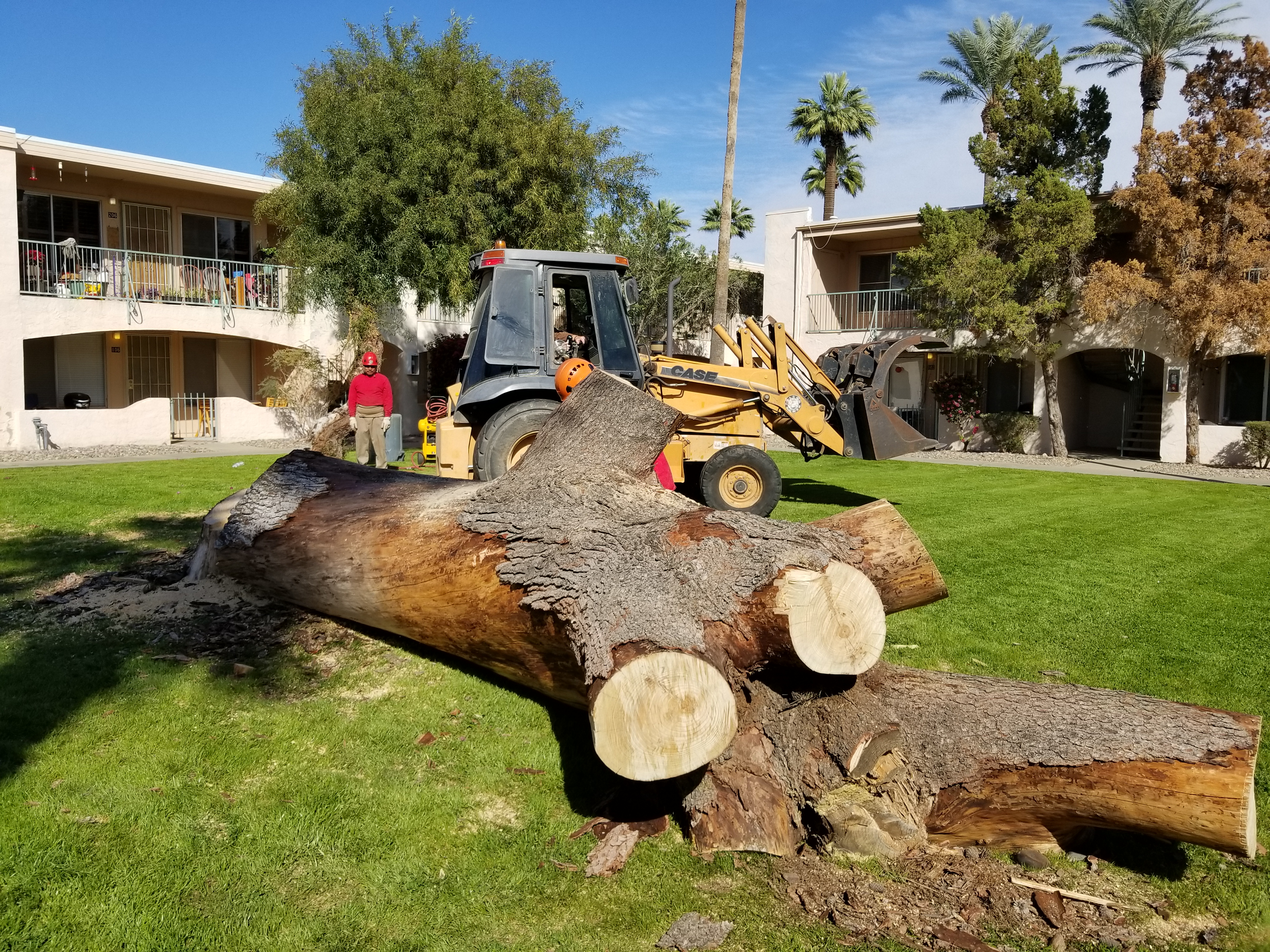 Tree Removing and Cutting in phoenix Arizona