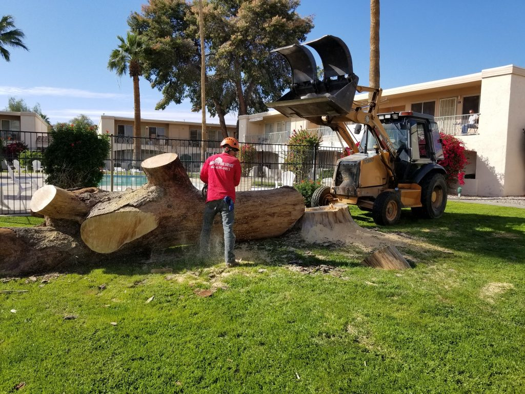 tree stump grinding phoenix arizona